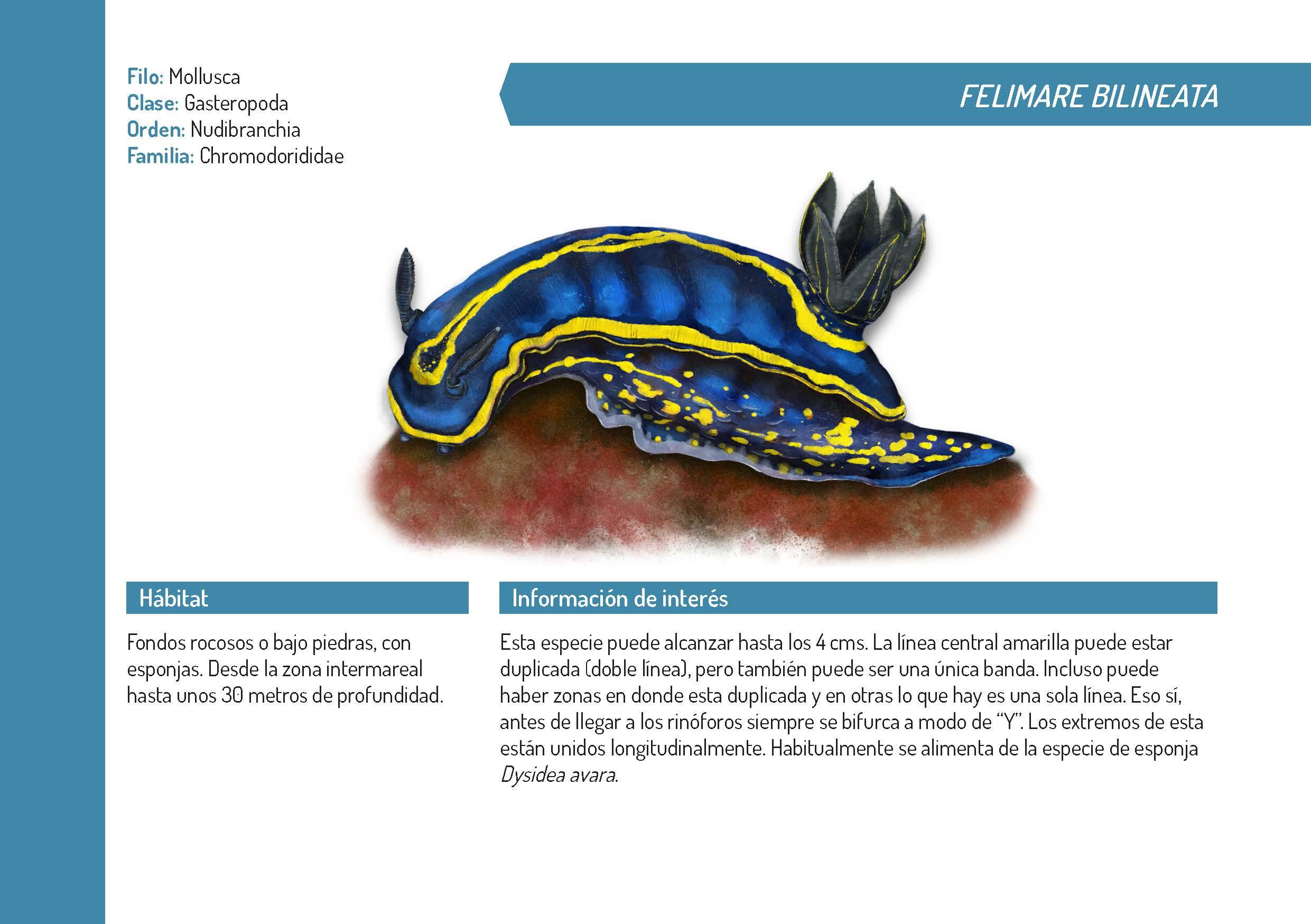 Illustrations owned by Vanessa González Ortiz: http://vgonzalezortiz.com/en/mi-trabajo/